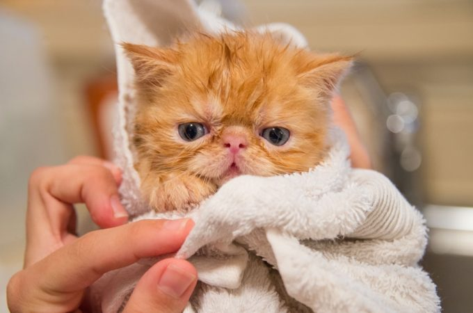 Why Routine Cat Grooming Near Me Is Important?